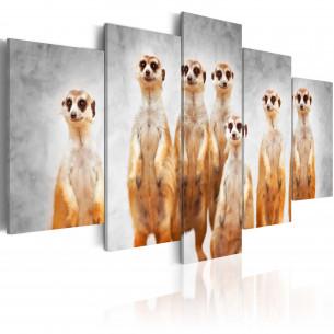 Tablou Meerkats 100 cm x 50 cm