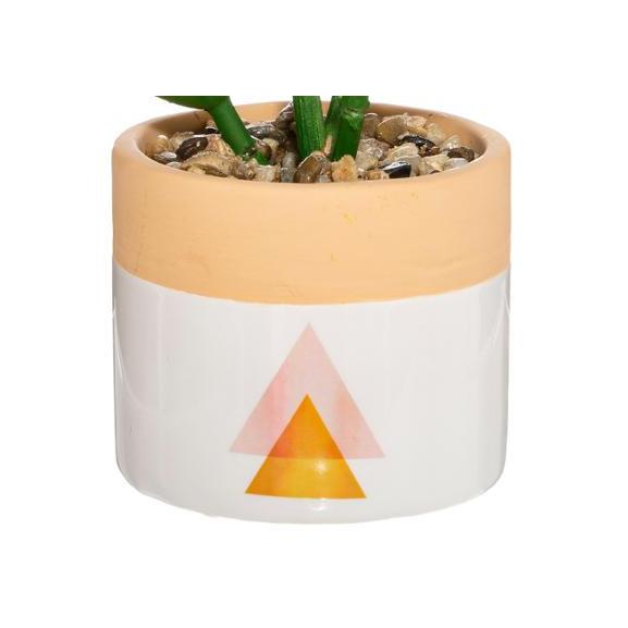 Plante Ghiveci Ceramic Alb naturlich.ro