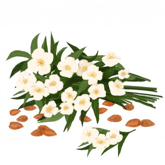 Parfum de Interior Almond & Jasmine naturlich.ro