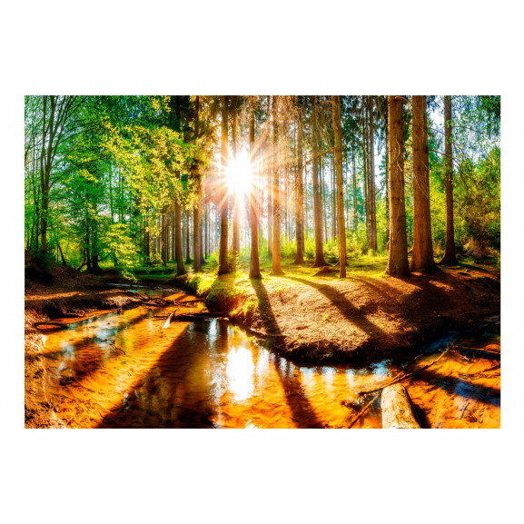 Fototapet Marvelous Forest 100 cm x 70 cm naturlich.ro
