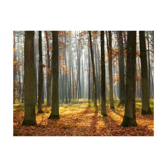 Fototapet Autumn Trees 200 cm x 154 cm naturlich.ro