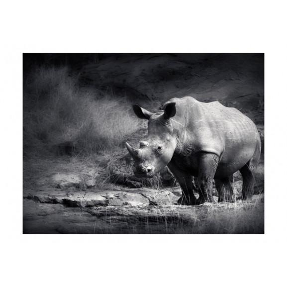 Fototapet Rhinoceros Lost In Reverie 200 cm x 154 cm naturlich.ro