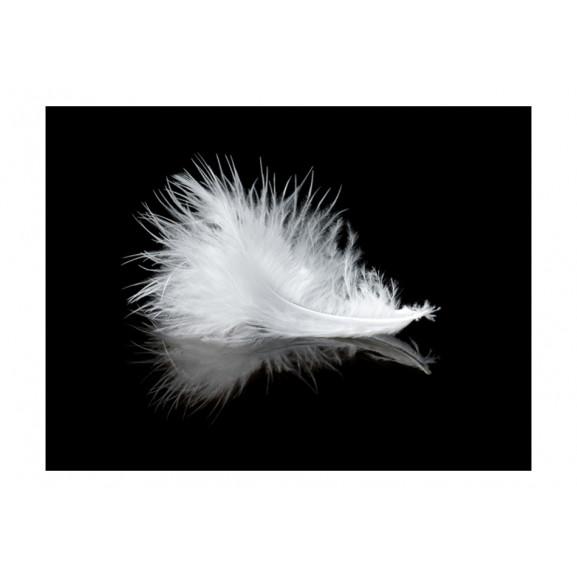 Fototapet White Feather 200 cm x 154 cm naturlich.ro