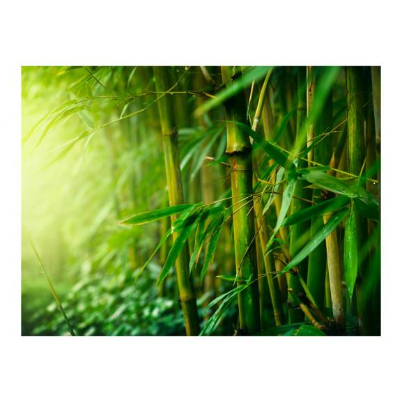 Fototapet Jungle Bamboo 200 cm x 154 cm naturlich.ro