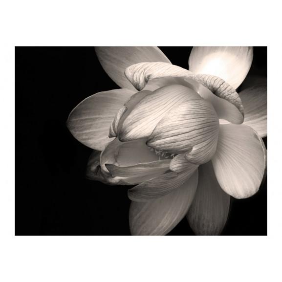 Fototapet Lotus Flower 200 cm x 154 cm naturlich.ro