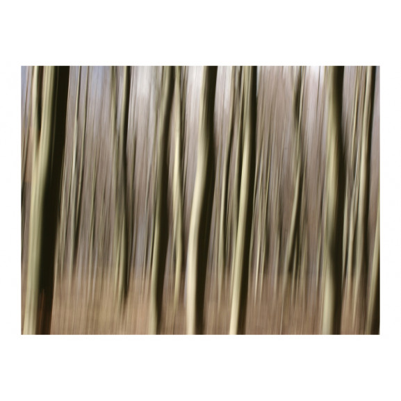 Fototapet Forest 200 cm x 154 cm naturlich.ro
