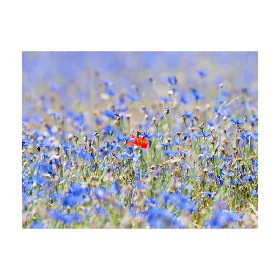 Fototapet A Sky-Colored Meadow Cornflowers 200 cm x 154 cm naturlich.ro