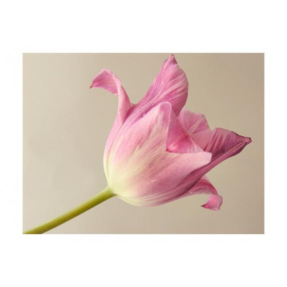 Fototapet Pink Tulip 200 cm x 154 cm naturlich.ro