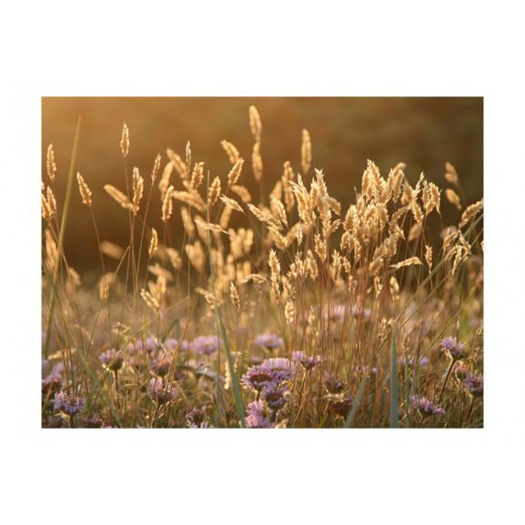Fototapet Awakening Ceral Field 200 cm x 154 cm naturlich.ro