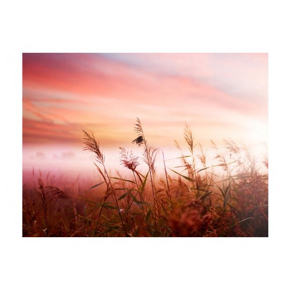 Fototapet Morning Meadow 200 cm x 154 cm naturlich.ro
