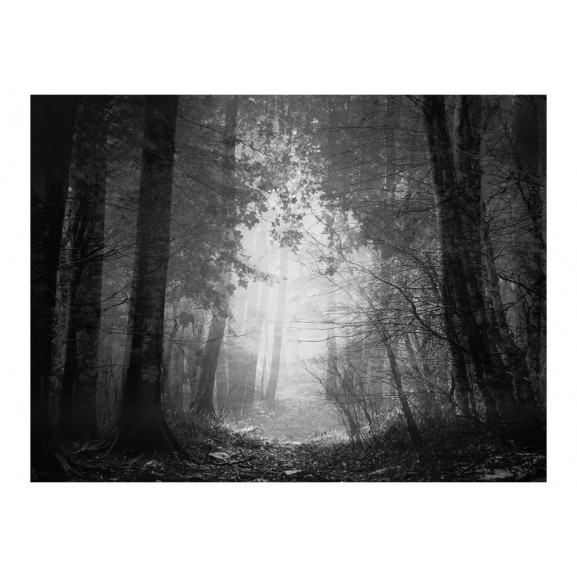 Fototapet Forest Of Shadows 200 cm x 154 cm naturlich.ro