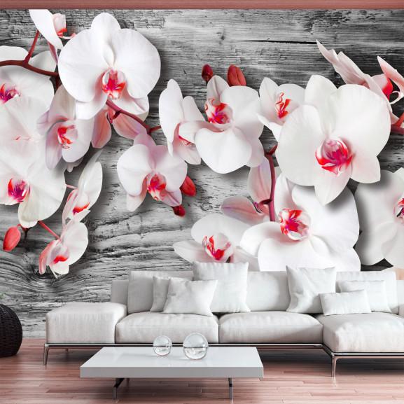 Fototapet Callous Orchids 100 cm x 70 cm