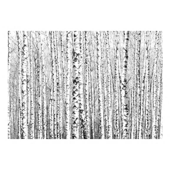 Fototapet Birch Forest 100 cm x 70 cm naturlich.ro