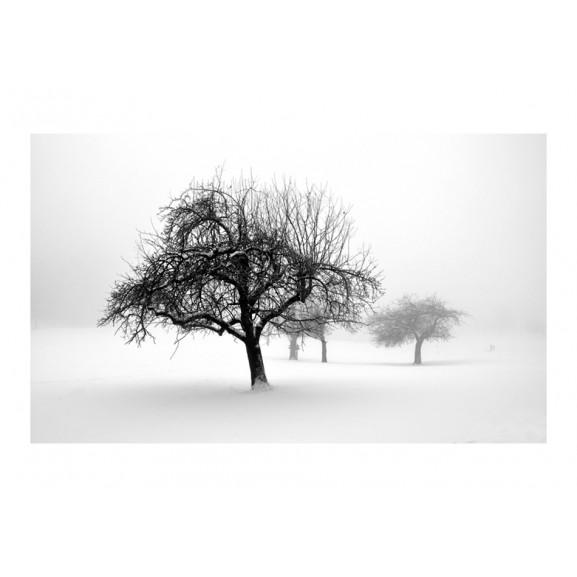 Fototapet Winter Trees 450 cm x 270 cm naturlich.ro